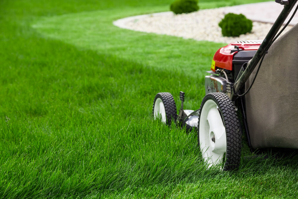 Best Lawn Mowing Companies In Tauranga